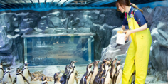 korea-seoul-lotte-world-sea-aquarium.png